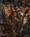 Aspen Bark print
