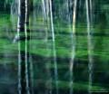 Beaver Pond print