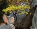 Fall Oaks and Granite print