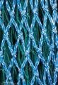 Fish Netting print