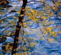 Maple Leaves Over the Merced River print