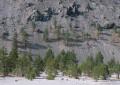 Pines - Mono Basin print