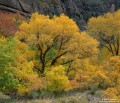 Zion Canyon Color print