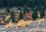 evergreen, autumn, Montana