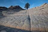 tree, rock, arizona