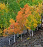 fall, aspen, ohio pass, colorado