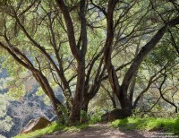 oak, trail, santa, barbara