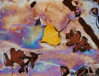leaf, rainbow, mineral, oil, sheen, wash, utah