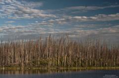Alaska Highway Pond