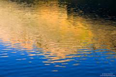aspen, reflection, north lake, sierra, nevada, ca