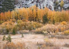 Autumn Meadow Color