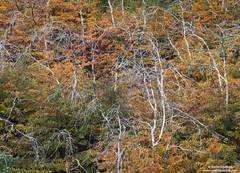 Autumn Skeletons