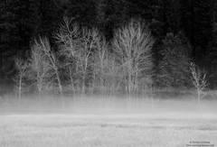 yosemite, park, fog