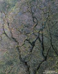 oak, merced river, yosemite