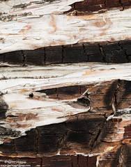Bark Abstract 2