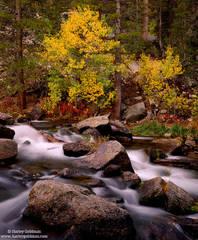 bishop, creek, fall, autumn, color, sierra, mountain,