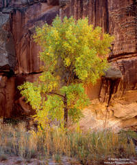 cottonwood, capitol reef, utah