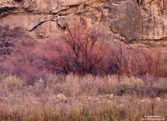 fall, color, creek, colorado