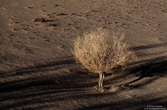 death , valley, national, park, dune