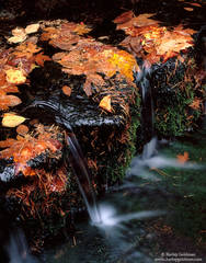 Yosemite, National Park, fern spring, autumn