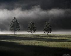 Foggy Trio