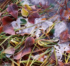 yosemite, national, park, frozen