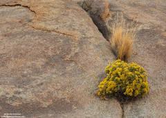 Granite And Rabbitbrush