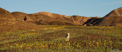 Maggie, flowers, desert