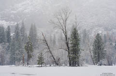 snow, snowstorm, yosemite, valley