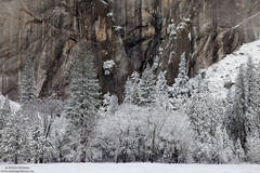 leidig, meadow, yosemite, valley, snow, national park