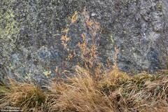 Lichen And Such