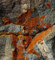 lichen, rorschach, granite, sierra, nevada, mountain