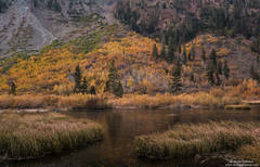Lundy Canyon Pond