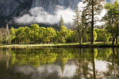 merced, river, yosemite, park, reflection, oak,