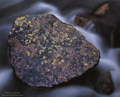 rock, creek, sierra, nevada, lichen