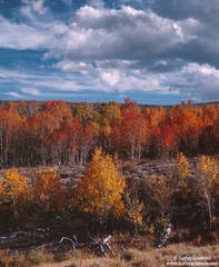 sierra,nevada, rust, gold, aspens, clouds