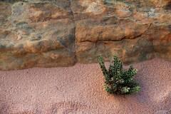 Sand Dweller
