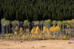 Montana, yellow, green