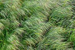 Spring Grass Waves