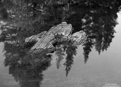 tarn, rock, tioga, pass, yosemite, national, park