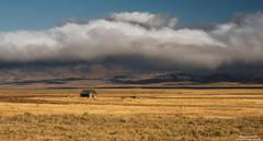 shed, Montana