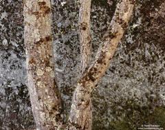 yosemite, valley, national, park, tree, lichen