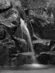 wildcat, creek, yosemite, national, park