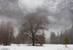 yosemite, valley, winter, bare