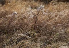 Yosemite Valley Grasses