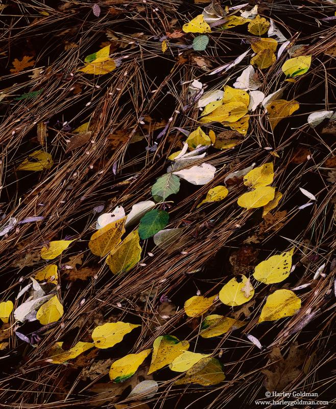 shore, river, merced, leaves, needles, yosemite, national, park, photo