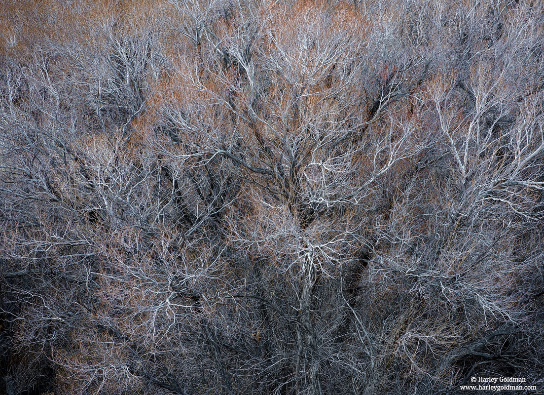 owens valley, sierra, nevada, tree, branches, photo
