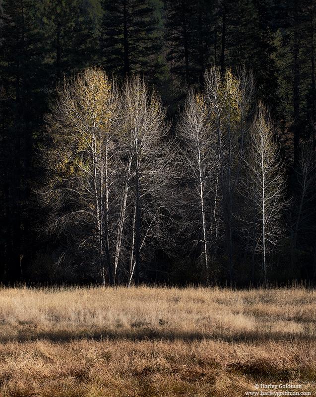 autumn, yosemite, national, park, photo