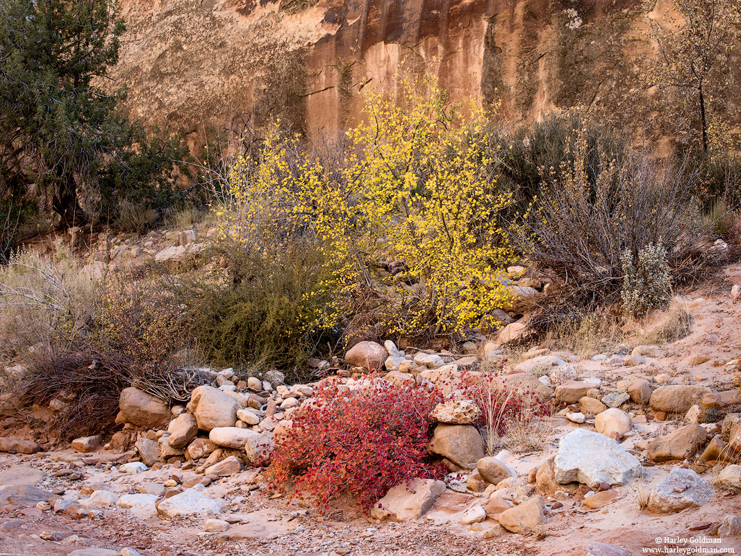 autumn, utah, palette, fall, canyon, sandstone, rock, red, yellow