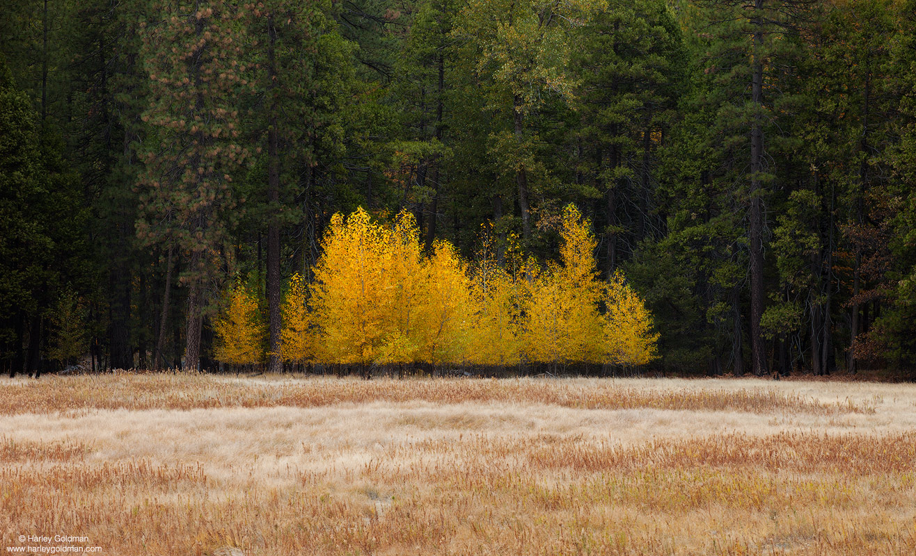 meadow, yosemite, national, park, photo